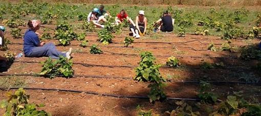 Agricoltura, dalla Regione contributi ai Comuni per l'affitto delle case per gli stagionali