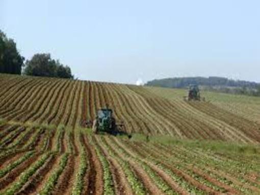 Impiegati agricoli, rinnovato il contratto regionale di lavoro