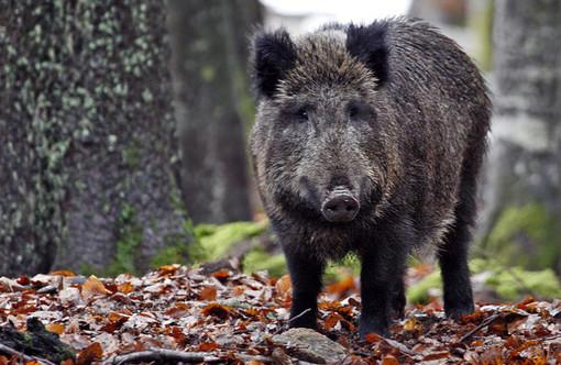 Recupero degli animali selvatici coinvolti in incidenti, se ne parla il 5 febbraio a Grugliasco