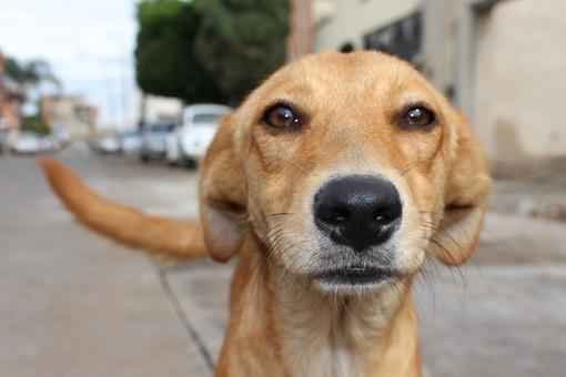 Cani abbandonati sui balconi o nelle auto: ecco quando intervenire e come comportarsi