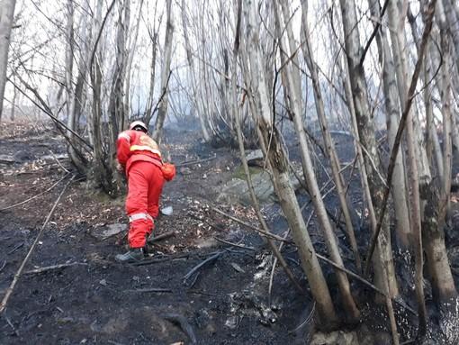 incendi boschivi - foto d'archivio