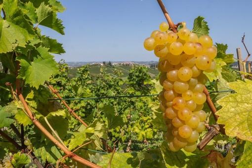"""Finto """"Made in Italy"""": l'Europa chiude un occhio in Australia. Grandi problemi per Prosecco, la Raschera, il Moscato e l'olio d'oliva"""