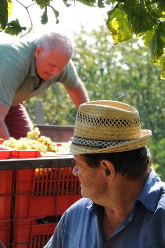 La Regione a difesa del vino: l'assessore Protopata scrive al ministro Bellanova