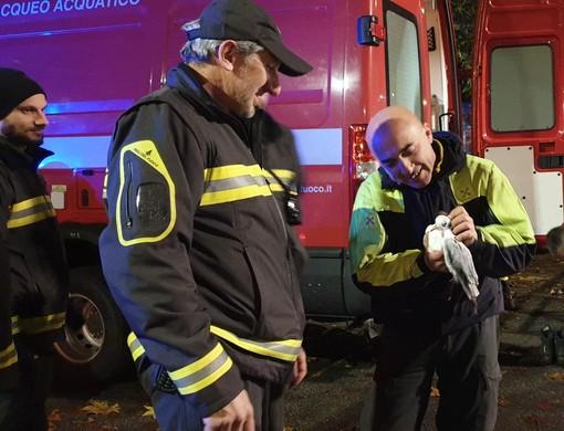 Venaria, i pompieri salvano un gabbiano finito nelle acque del Ceronda